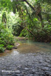 Rain forest creek in Ujung Kulon