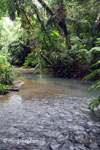 Lowland rain forest creek in Ujung Kulon
