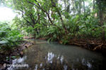 Lowland jungle creek in Ujung Kulon National Park