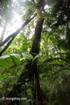 Lowland forest in Java's Ujung Kulon National Park