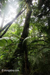 Lowland forest in Java's Ujung Kulon NP