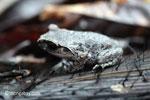 Toad [java_0236]