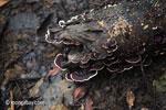 Fungi [java_0258]