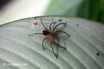 Spider [java_0342]