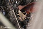 Frog [java_0346]