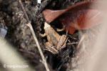 Frog [java_0347]