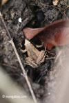 Frog [java_0348]
