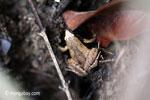Frog [java_0351]