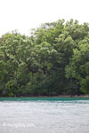 Coastline of Peucang Island [java_0394]