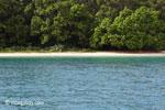 Deer on the beach at Peucang Island [java_0431]