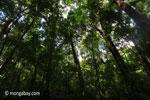 Peucang Island rain forest [java_0495]