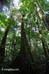 Rain forest tree