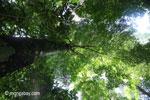 Peucang Island rain forest [java_0510]