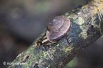 Snail [java_0566]