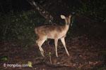 Deer [java_0648]
