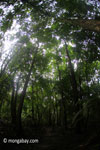 Forest in Java [java_0725]