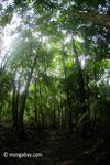Javan forest [java_0727]