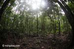 Rainforest in Java