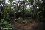 Lowland rain forest creek in Java's Ujung Kulon National Park