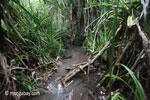 Ulung Kulon swamp