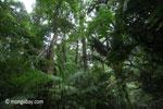 Ulung Kulon lowland rain forest