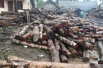 Sawmill for teak in Java