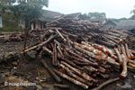Teak log dump outside an Indonesian sawmill