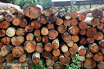 Stack of round logs at a sawmill