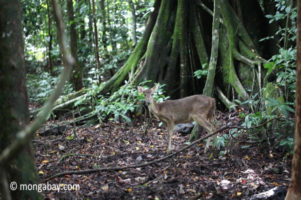 Deer [java_0044]