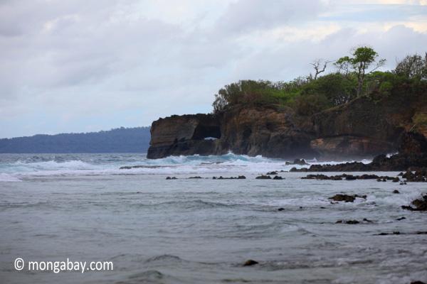 Waves breaking on the ocean-side coastline of Peucang Island