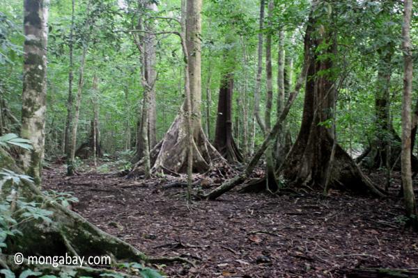 Lowland rainforest in Java