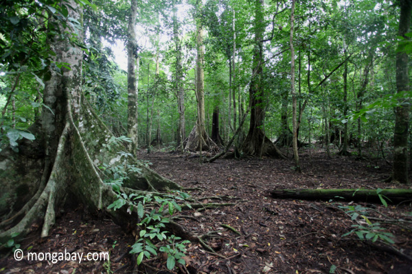 Lowland rainforest in Java's Ujung Kulon National Park