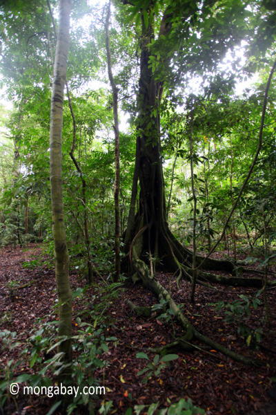 Ujung Kulon rainforest