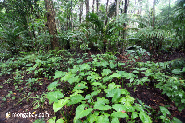 Lowland jungle in Ujung Kulon National Park [java_0188]