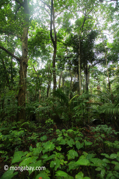 Lowland tropical forest in Ujung Kulon National Park