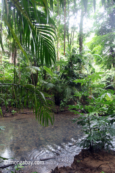 Lowland rainforest stream in Ujung Kulon