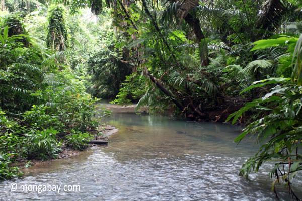 Lowland rainforest creek in Ujung Kulon