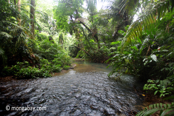 Lowland rain forest stream in Ujung Kulon