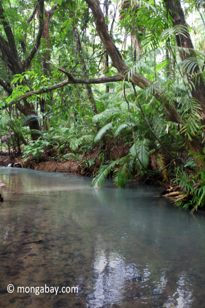 Jungle stream in Ujung Kulon