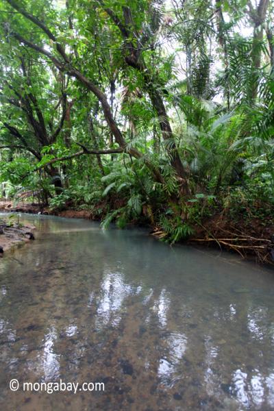 Lowland jungle stream in Ujung Kulon
