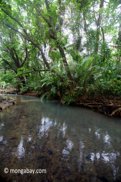 Jungle creek in Ujung Kulon
