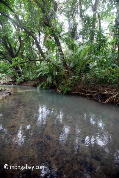 Lowland jungle creek in Ujung Kulon