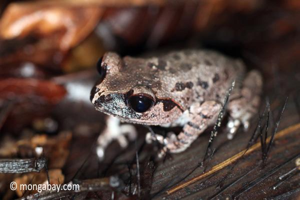 Toad [java_0241]