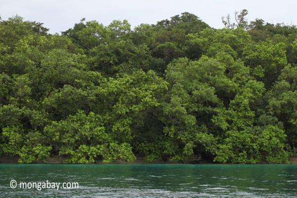 Rainforest and turquoise ocean [java_0264]