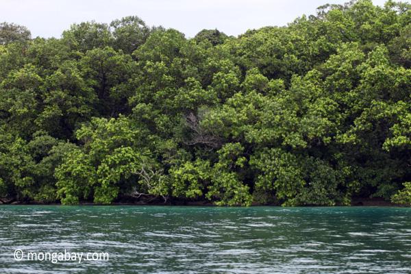 Rainforest and turquoise ocean [java_0267]