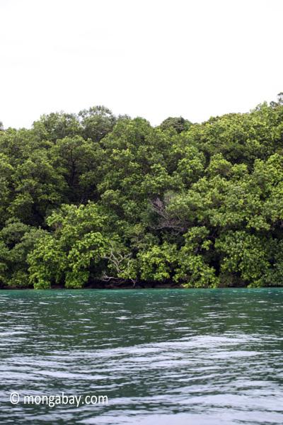 Rainforest and turquoise ocean [java_0268]
