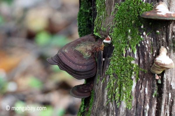 Fungi [java_0271]