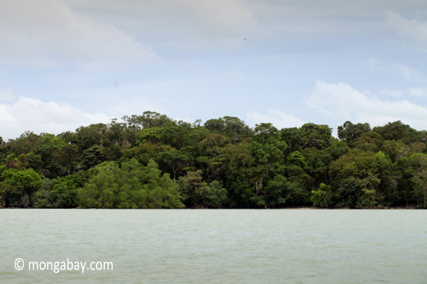 Rainforest of Ujung Kulon as seen from the sea [java_0276]