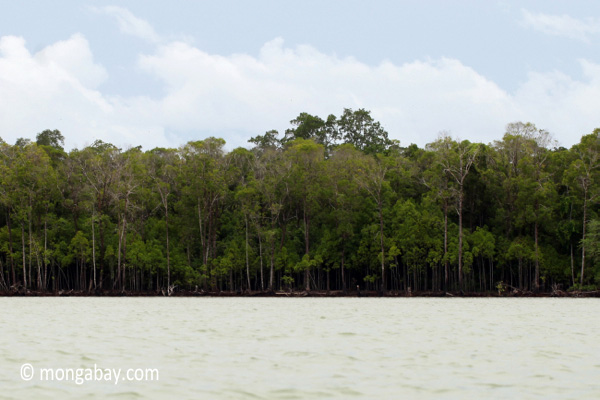 Rainforest of Ujung Kulon as seen from the sea