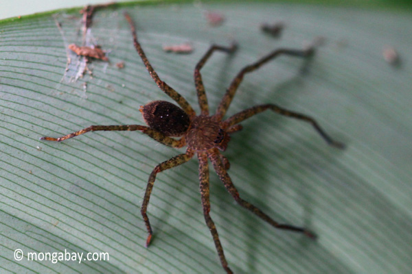 Spider [java_0340]